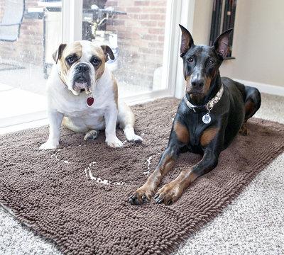 Soggy-Doggy-Doormat